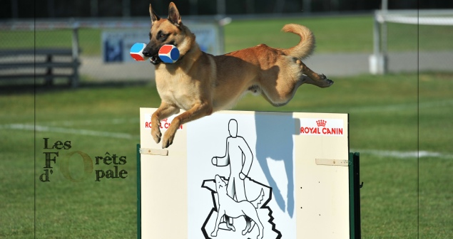 club canin 49 bouchemaine